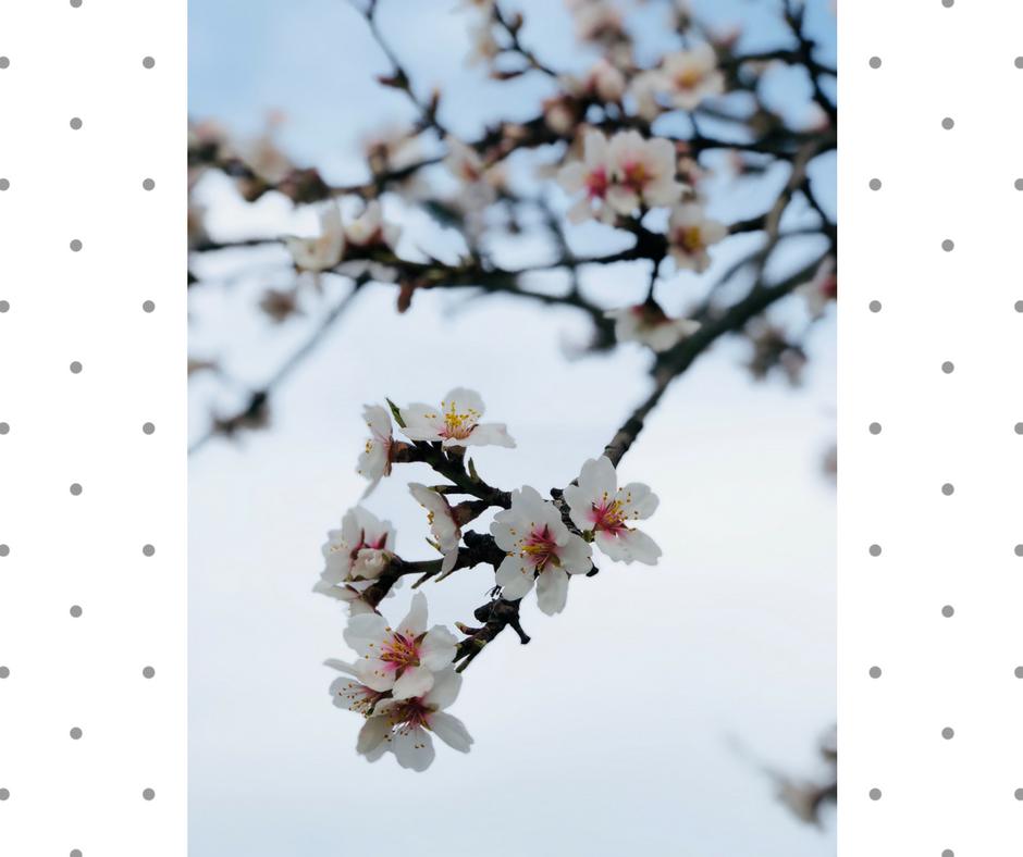 kvet mandle