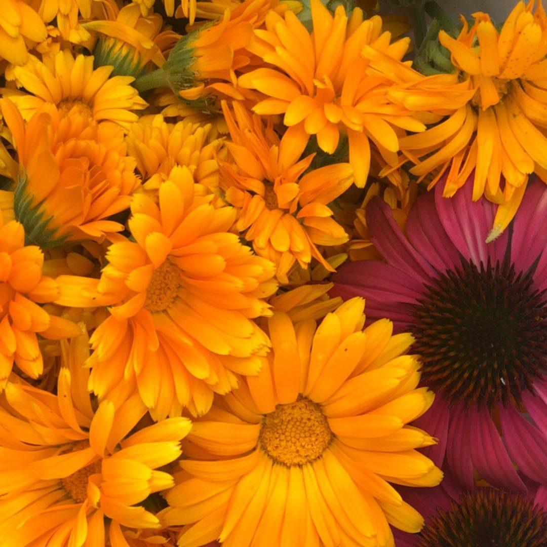 Záhrada-Návody, postupy